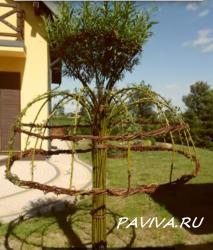 Декоративное дерево в спб