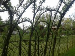 Беседка из ивы и забор