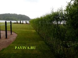 живой забор у озера