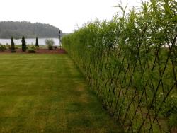 зелёная изгородь
