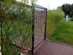 живой забор растения