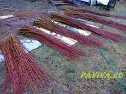 где купить лозу для плетения