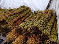 Лоза для плетения