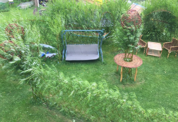низкие кустарники для живой изгороди