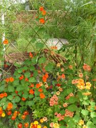 виды живых изгородей
