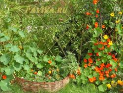 оградка для грядок с цветами