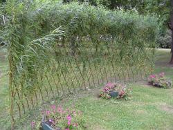 создание живых изгородей