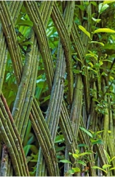Забор -изгородь из ивы в четыре прута