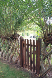 Живая изгородь в два прута