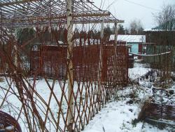 Живая изгородь фото зимой