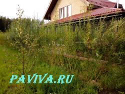 фото изгороди из ивы в конце мая