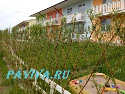 Живой забор вдоль дома