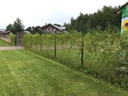живой забор в июне
