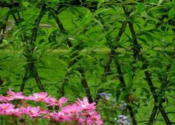 Живая изгородь в листве