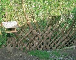 Забор стал крепче