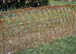 Забор после посадки