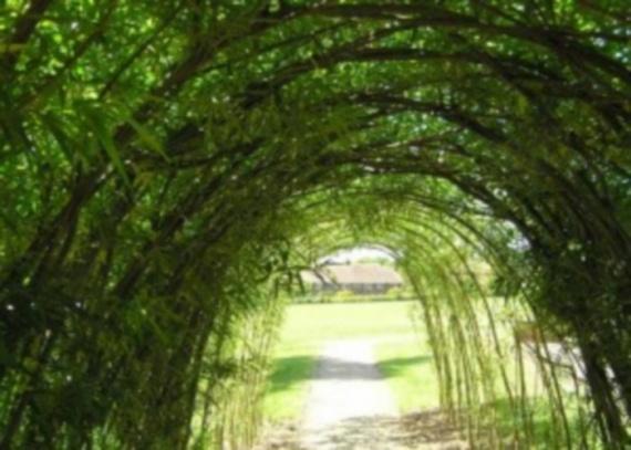 Арка садовая со скамейкой,фото арок садовых