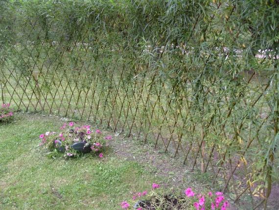 Зелёный забор живая изгородь фото