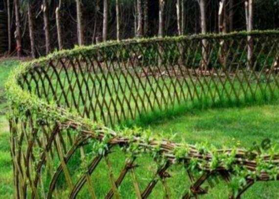 Круглая живая изгородь