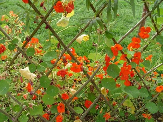 Озеленение с цветами
