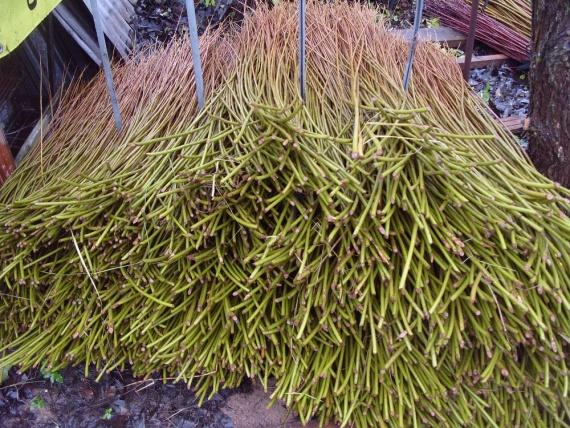 Купить прут ивы
