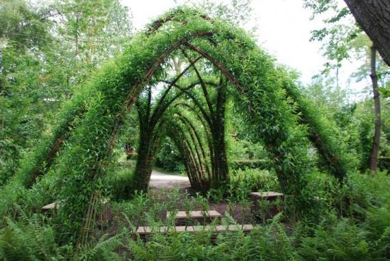 Озеленение дачи своими руками