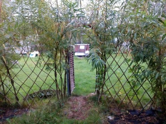 Живой забор