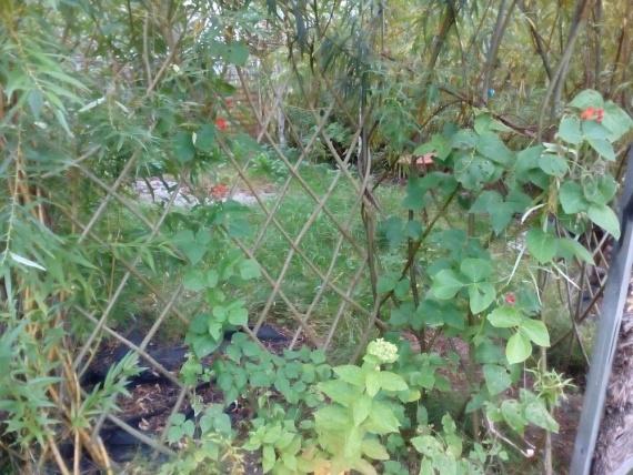 Забор изгородь на даче