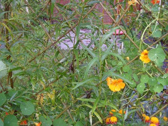 Растения для сада