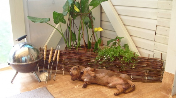 Собака на садовом участке