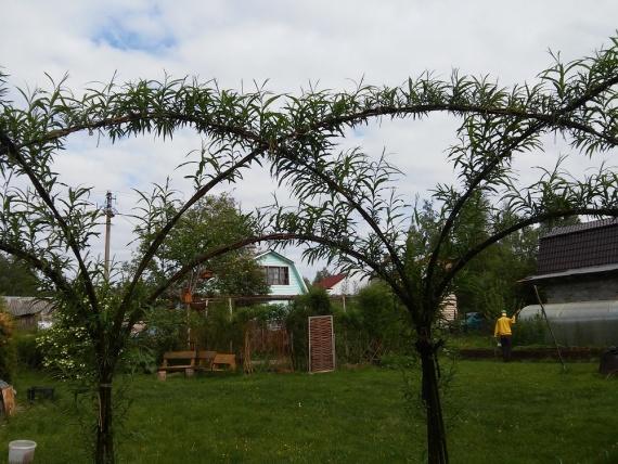 украсить садовый участок