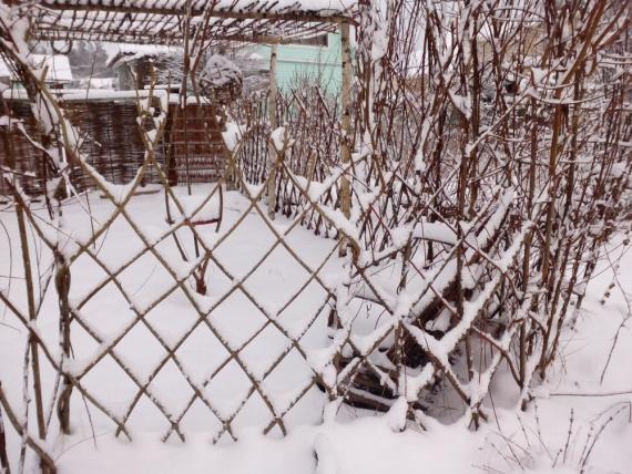 зимой сад