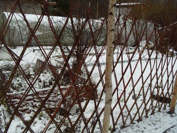 Живая изгородь зимой