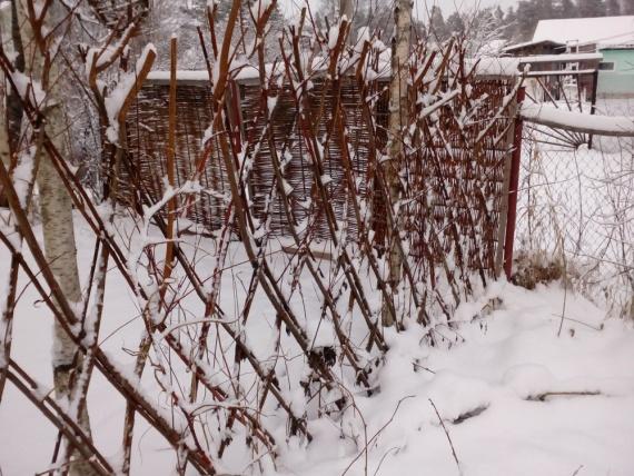 какие растения под снегом