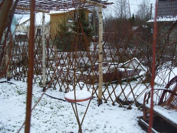 ива лучшее растение на зиму