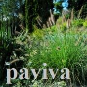 красивые травы