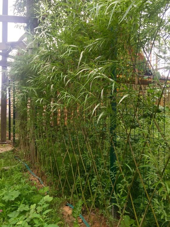дерево и живая изгородь