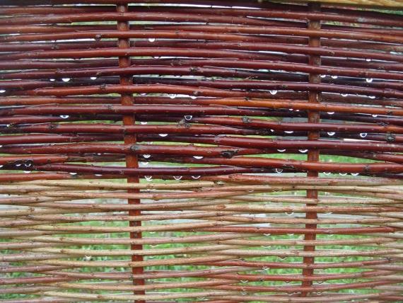 строение коры ивы