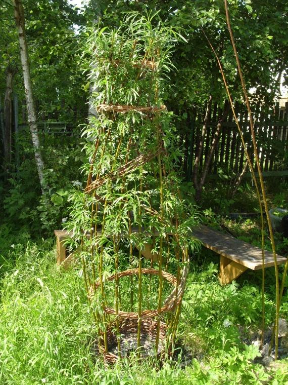 деревья и кустарники для альпинария