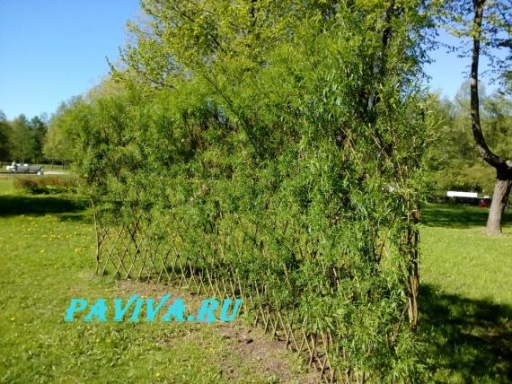 сорняки в огороде