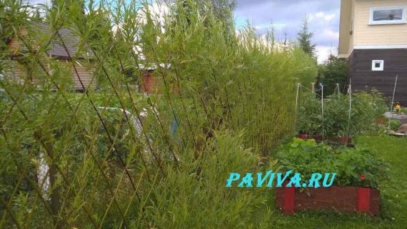 удобрение для цветов из луковой шелухи