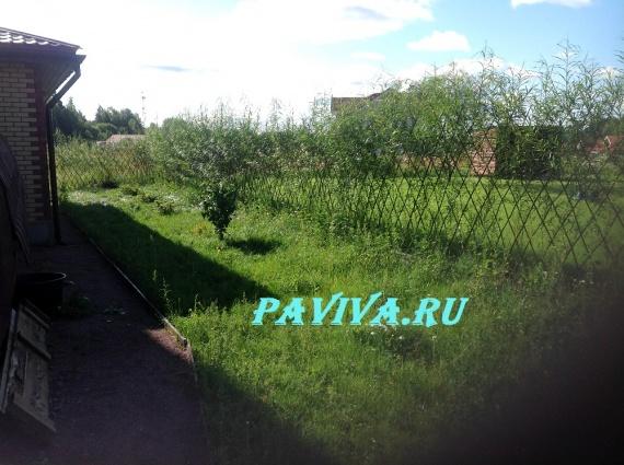 Уход за растениями в саду