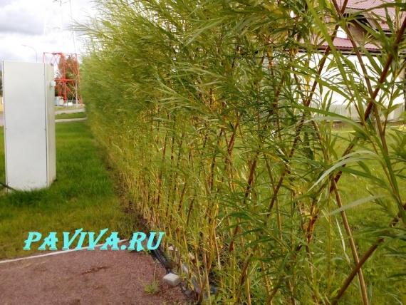 цветочный сад на даче фото