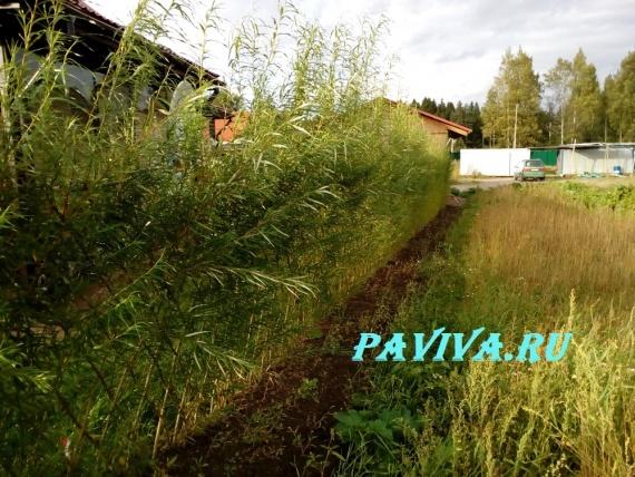 подготовка почвы для газона своими руками