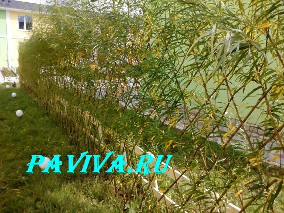 Живой забор плетёный