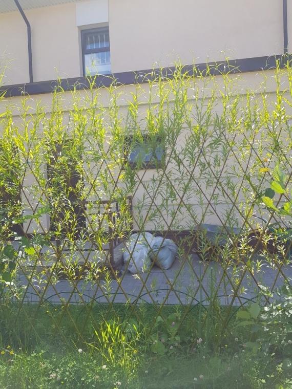 Забор плетёный из веток ивы
