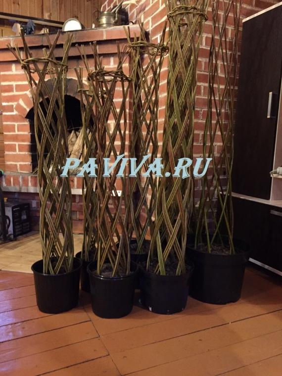 декоративное дерево в горшке купить
