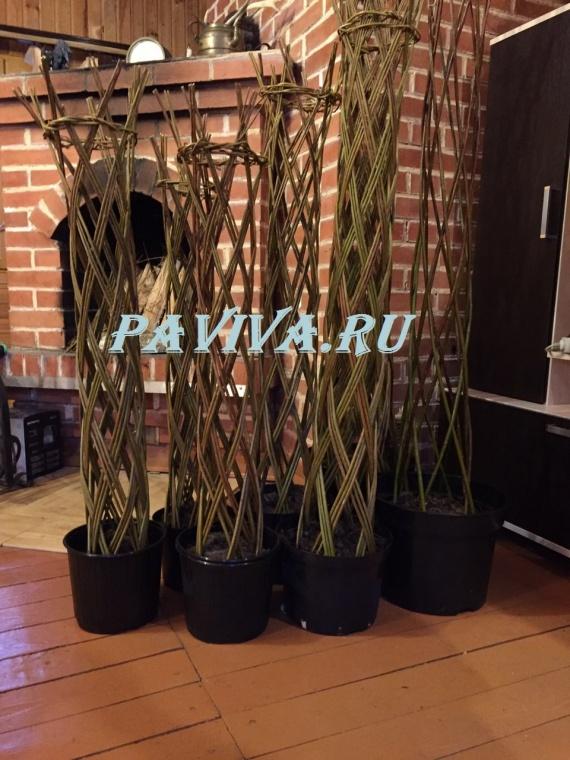декоративные деревья для дома в горшках
