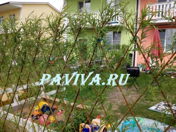 Сайт paviva.ry
