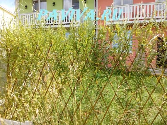 Цена на живую изгородь из ивы